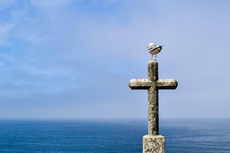 De zeemeeuw zit op oogst van een godsdienstig kruis van steen in een vesting royalty-vrije stock afbeeldingen