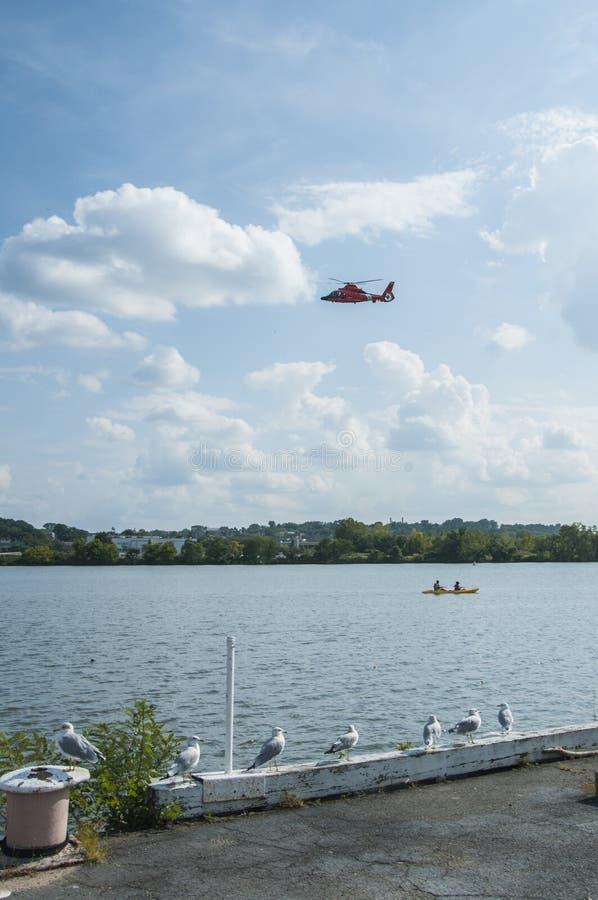 De zeemeeuwen, de helikopters en Kayakers maken omhoog de Anacostia-Rivierscène, Washington, gelijkstroom stock afbeelding