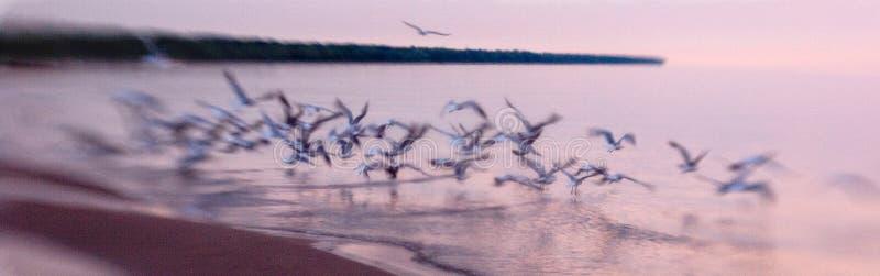 De zeemeeuwen nemen vlucht stock foto's