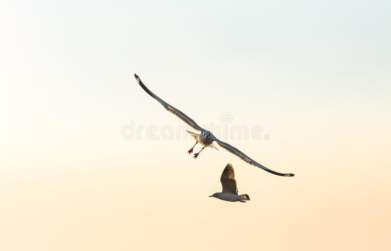 De zeemeeuwen spreiden hun vleugels over de hemel uit royalty-vrije stock afbeeldingen