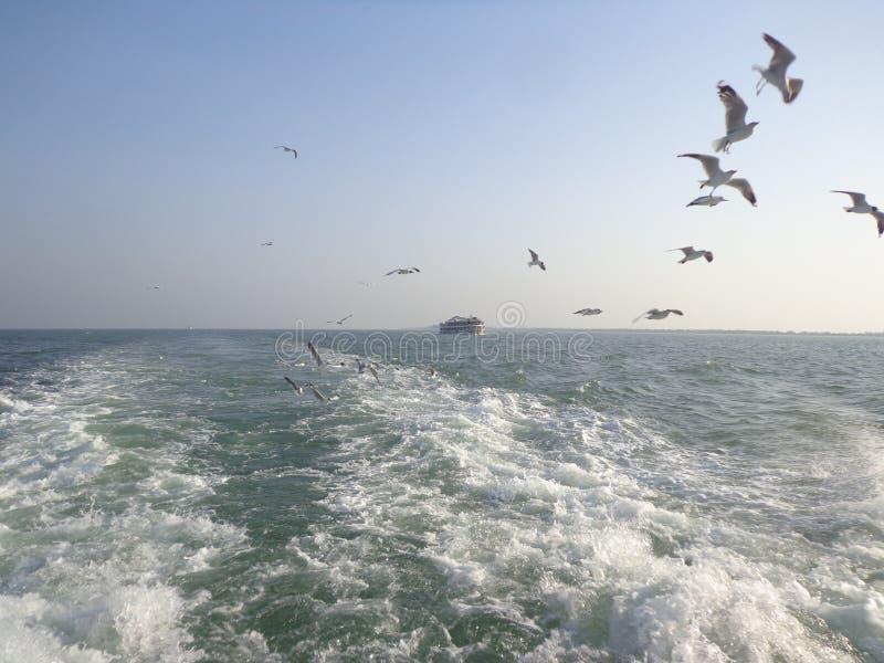de zeemeeuwen zijn vlieg in de hemel royalty-vrije stock afbeelding