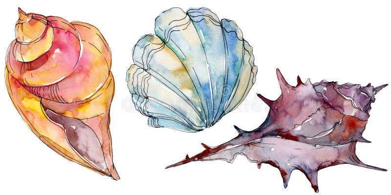 De zeeschelp tropische elementen van het de zomerstrand Waterverf achtergrondillustratiereeks Geïsoleerd shell illustratieelement stock illustratie