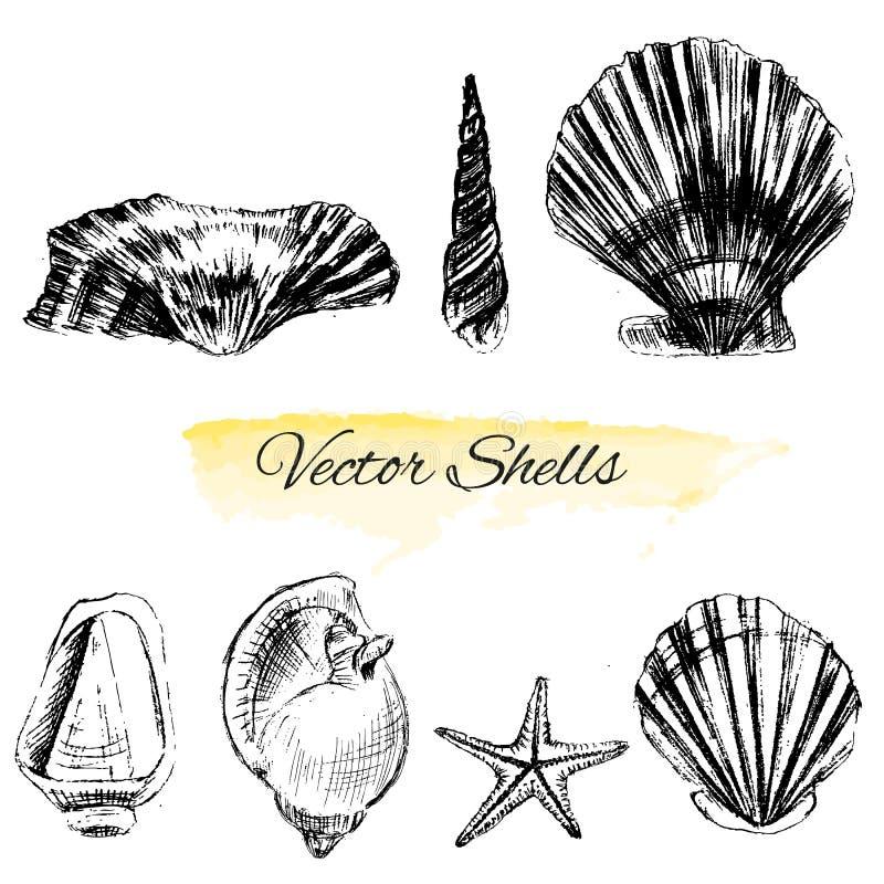 De zeeschelpen overhandigen getrokken grafische etsschets op witte achtergrond, collectionunderwater artistieke mariene elementen stock illustratie
