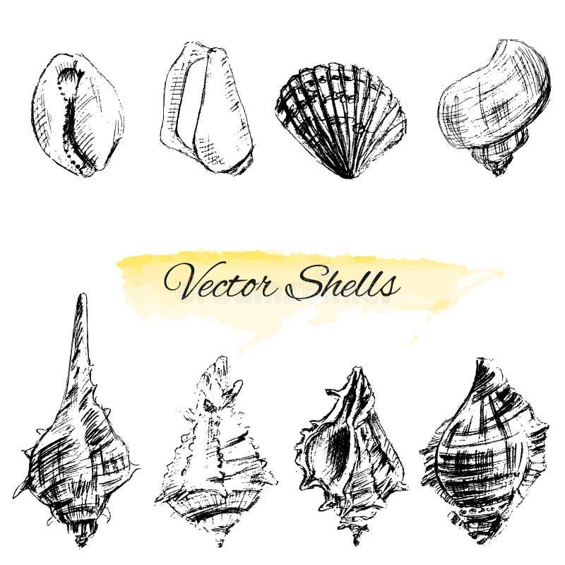 De zeeschelpen overhandigen getrokken vector grafische etsschets op witte achtergrond, collectionunderwater artistieke marine vector illustratie