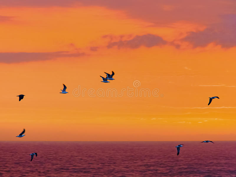 De zeevogels vliegen voorbij tegen een spectaculaire zonsondergang dichtbij Onwerenrivier, Tsitsikamma, Zuid-Afrika royalty-vrije stock foto's