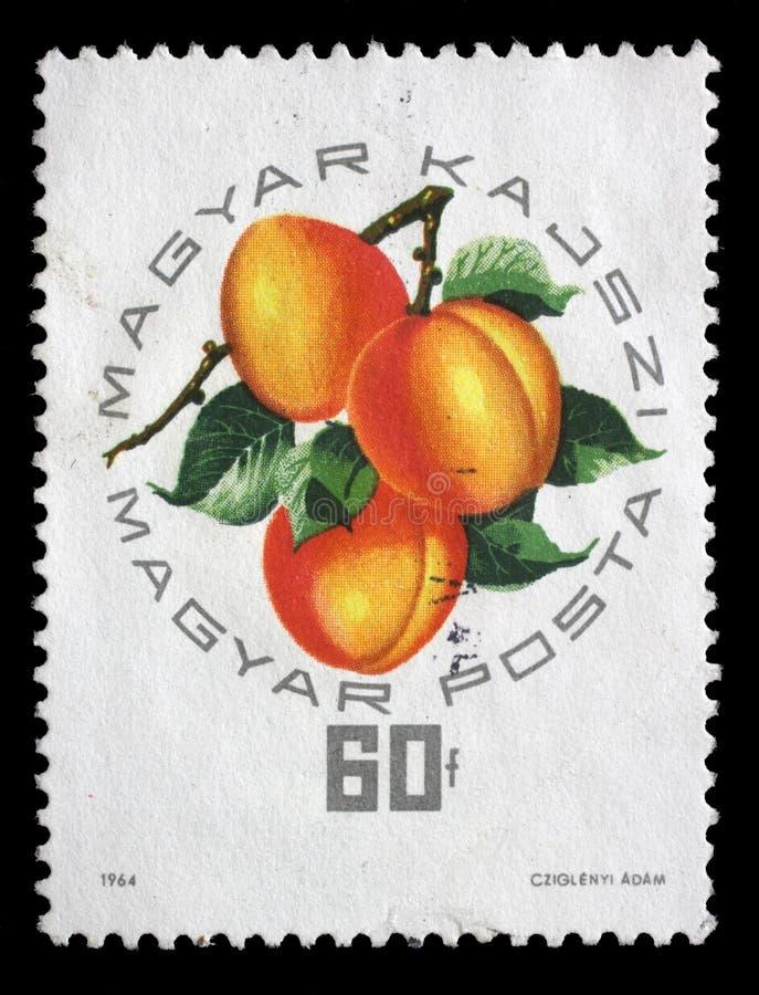 De zegel die in Hongarije wordt gedrukt, toont Hongaarse abrikoos stock afbeelding