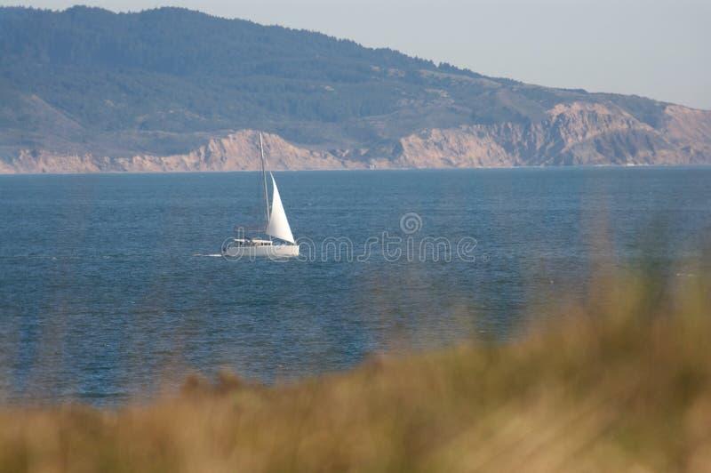 De zeilboot vaart dichtbij de Noordelijke kust van Californië met gras in de voorgrond stock foto's