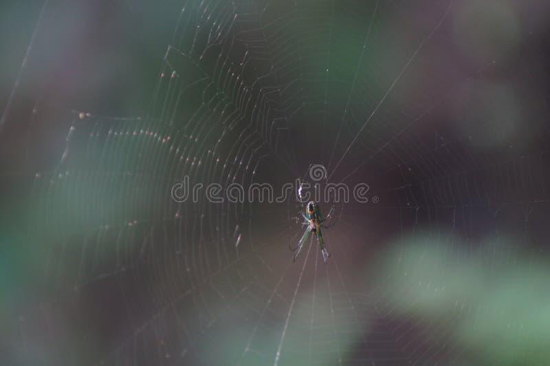 De zelfde spin die in zijn Web rusten stock foto