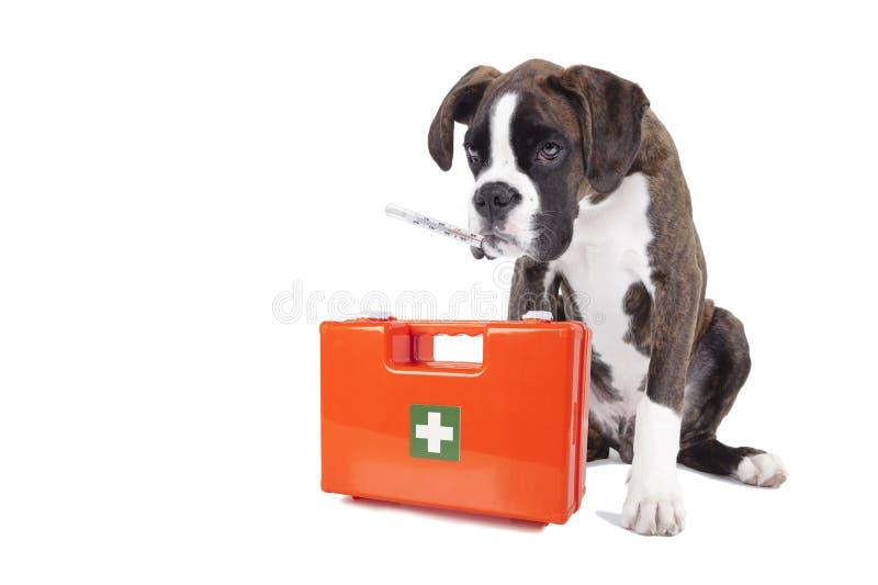 De zieke doos van de hondeerste hulp stock afbeelding