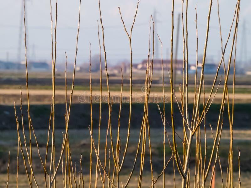 De zijvegetatie van het land stock foto