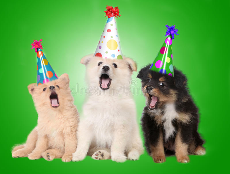 De zingende Honden van het Puppy van de Verjaardag stock afbeeldingen