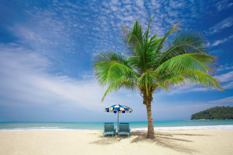 De zitkamer van de palm stock foto