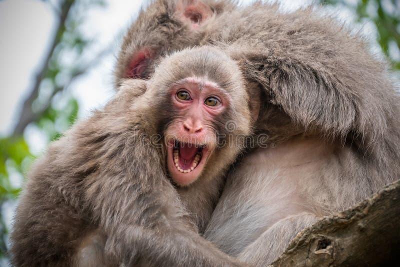 De zitting van de babyaap op de boom die moeder en het glimlachen koesteren stock afbeelding