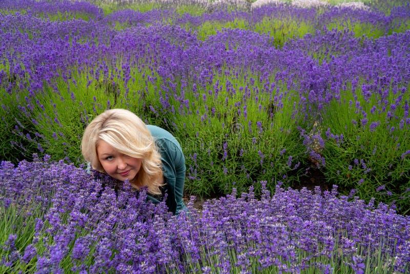 De zitting van de blondevrouw op een lavendelgebied ziet omhoog eruit aangezien zij de geurige bloemen snuift stock foto's
