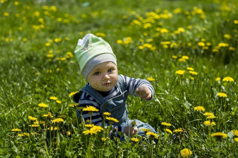De zitting van de babyjongen op een gebied met bloemen royalty-vrije stock afbeeldingen