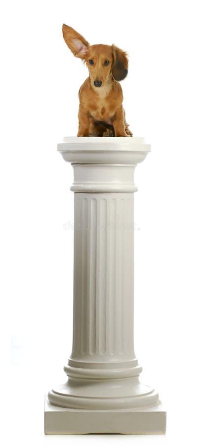 De zitting van de hond op een voetstuk stock foto