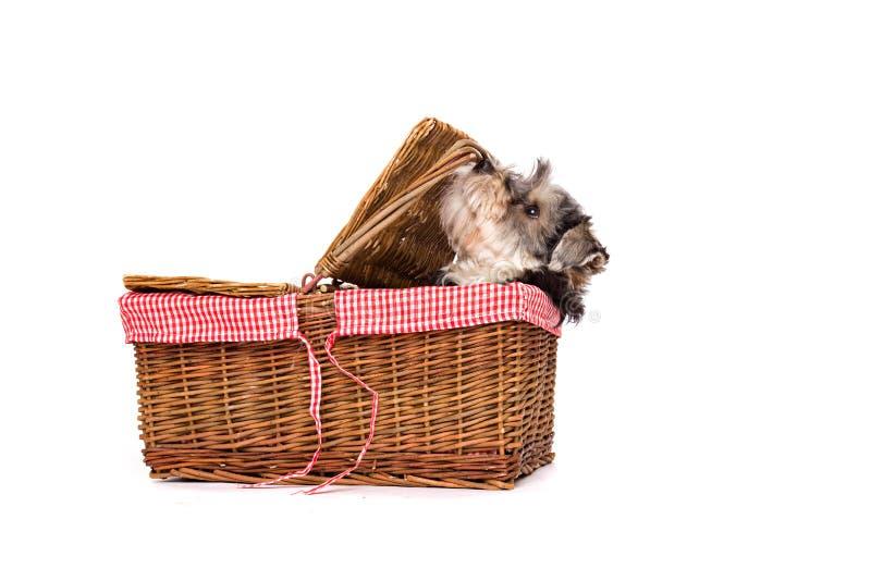 De zitting van de hond op een witte oppervlakte in een mand. stock foto's