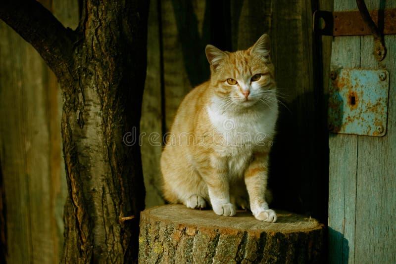 De zitting van de kat stock fotografie
