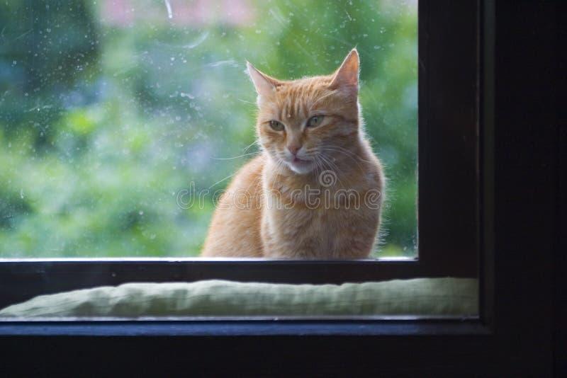 De zitting van de kat bij venster stock foto's