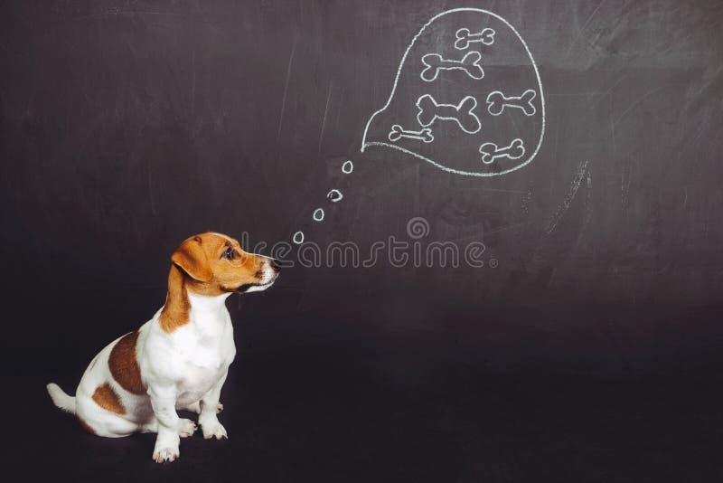 De zitting van de puppyhond en het dromen van natuurvoeding in een gedachte bubb royalty-vrije stock foto