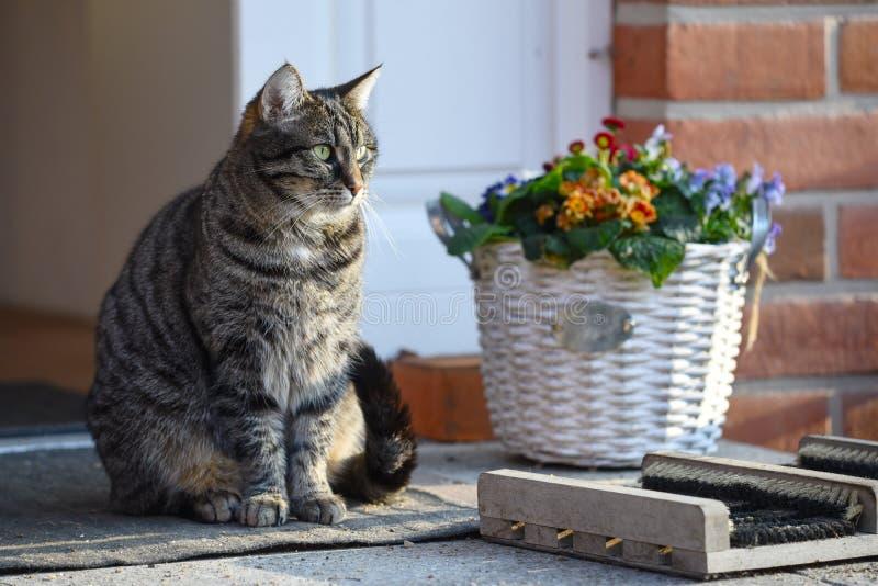 De zitting van de gestreepte katkat voor de ingang in de zon naast a royalty-vrije stock foto's