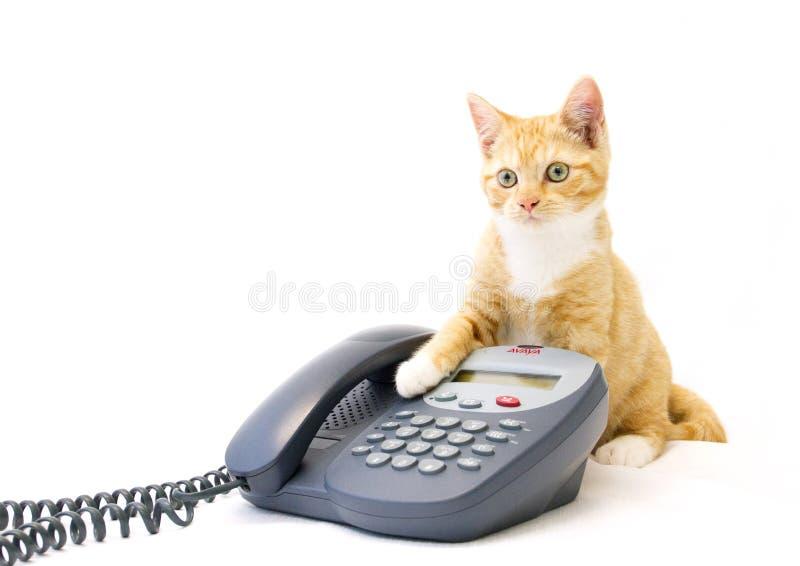 De Zitting van het Katje van de gember met Zijn Poot op een Telefoon stock afbeelding