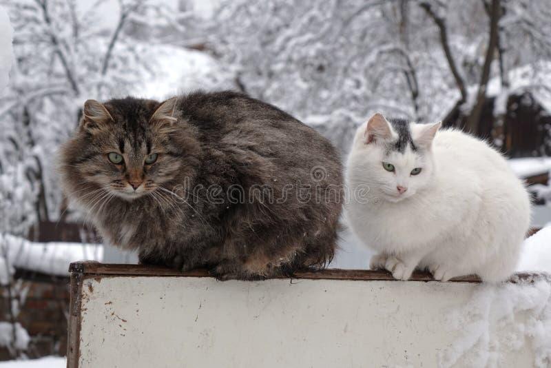 De zitting van het kattenpaar op de omheining in wintergarden stock afbeelding