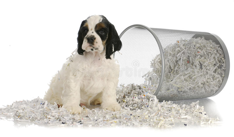 De zitting van het puppy in gerecycleerd document royalty-vrije stock foto's