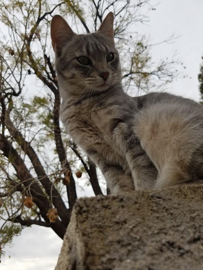 De zitting van de kat op muur stock foto