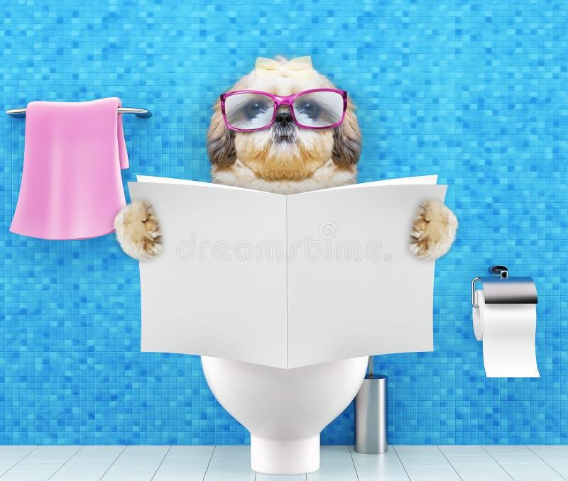 De zitting van de Shitzuhond op een toiletzetel met van de spijsverteringsproblemen of constipatie lezingstijdschrift of krant stock foto