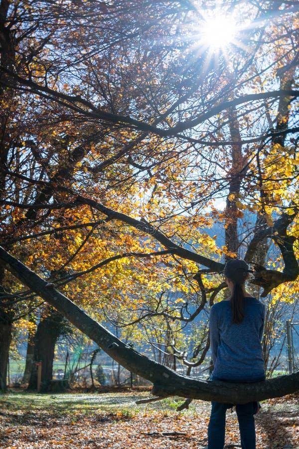 De zitting van de vrouwenwandelaar op een grote tak van een oude eiken boom in een daling boslandschap en het genieten van de van stock afbeeldingen