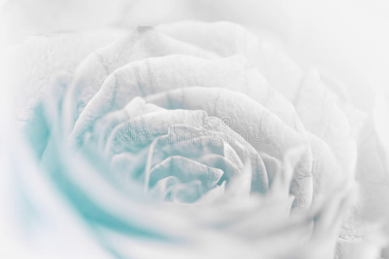 De zoete bloem van pastelkleurrozen in zachte en onduidelijk beeldstijl stock foto's