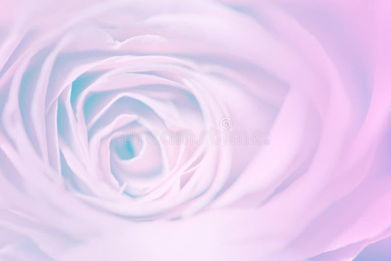 De zoete bloem van pastelkleurrozen in zachte en onduidelijk beeldstijl voor backg stock fotografie