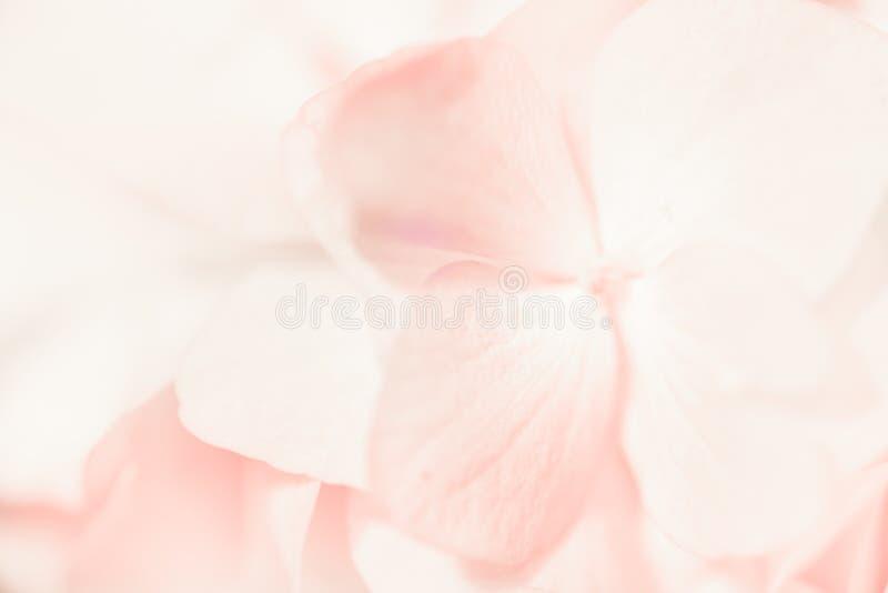 De zoete hydrangea hortensia's van de kleurenpastelkleur in zachte kleur en onduidelijk beeldstijl voor B royalty-vrije stock afbeelding