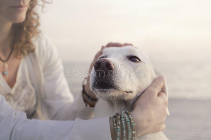 De zoete vrouw streelt veel liefs haar witte hond stock fotografie