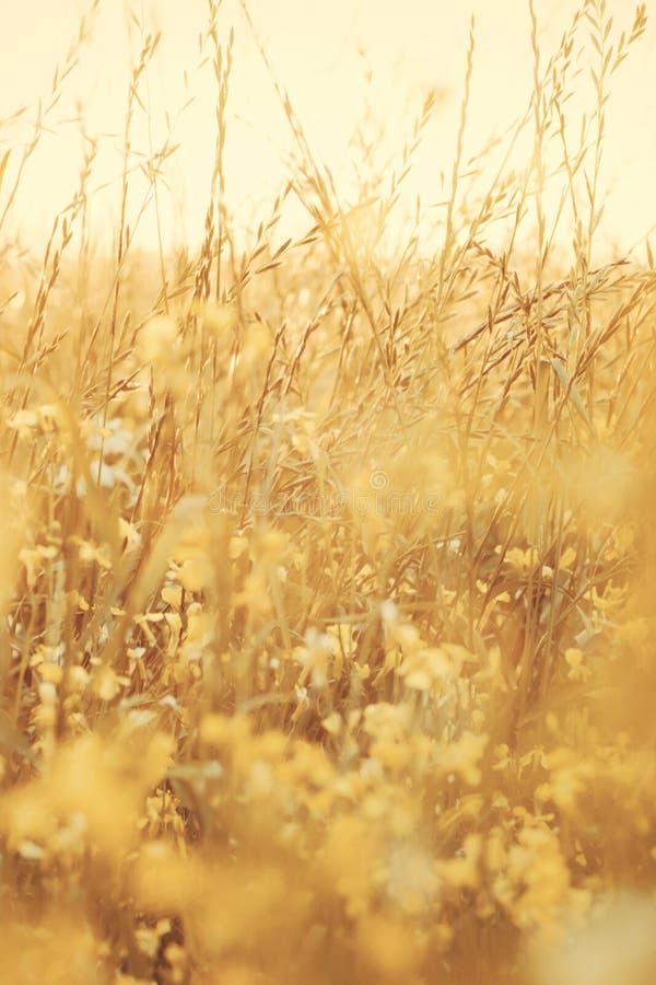 De zomer bloeit op tHerbs, weide met droog gras, natuurlijke de herfst natuurlijke achtergrond hij weide stock fotografie