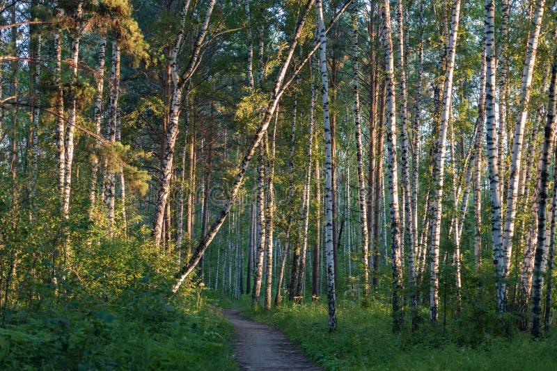 De zomer boslijn royalty-vrije stock afbeeldingen