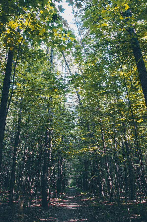 De zomer dicht hoog bos royalty-vrije stock foto