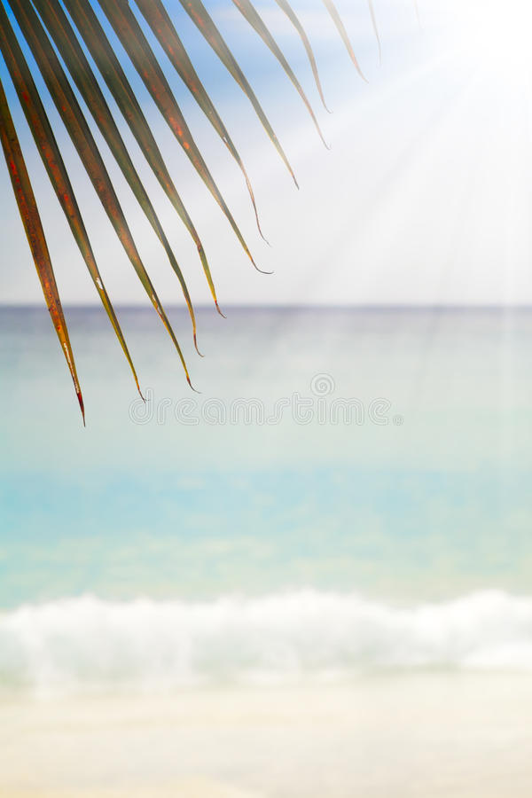 De zomer exotisch zandig strand met onduidelijk beeldpalmen en overzeese achtergrond stock fotografie