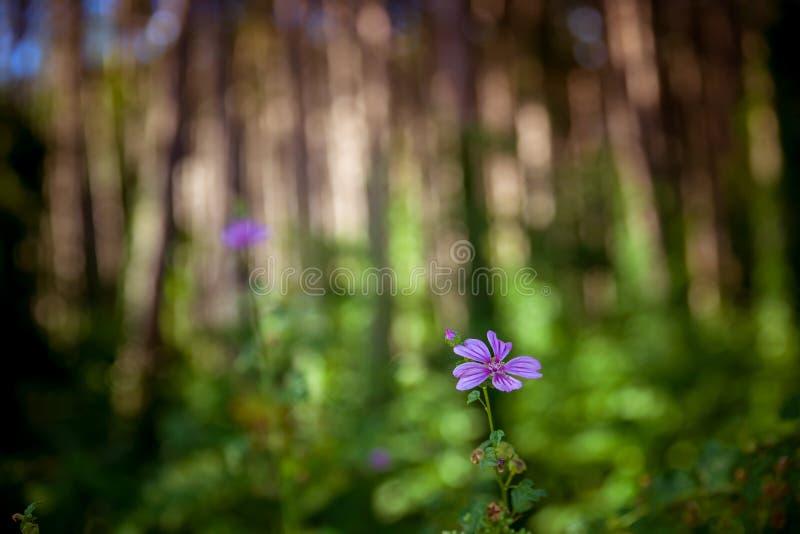 De zomer Forrest stock afbeeldingen