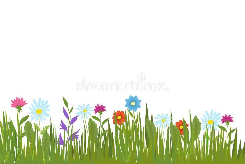 De zomer groene gras en bloemen Tuininstallaties en van gebiedskruiden vectorachtergrond vector illustratie