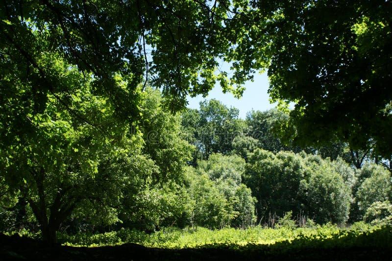 De zomer Het donkergroene gebladerte leidt tot koelte royalty-vrije stock foto's