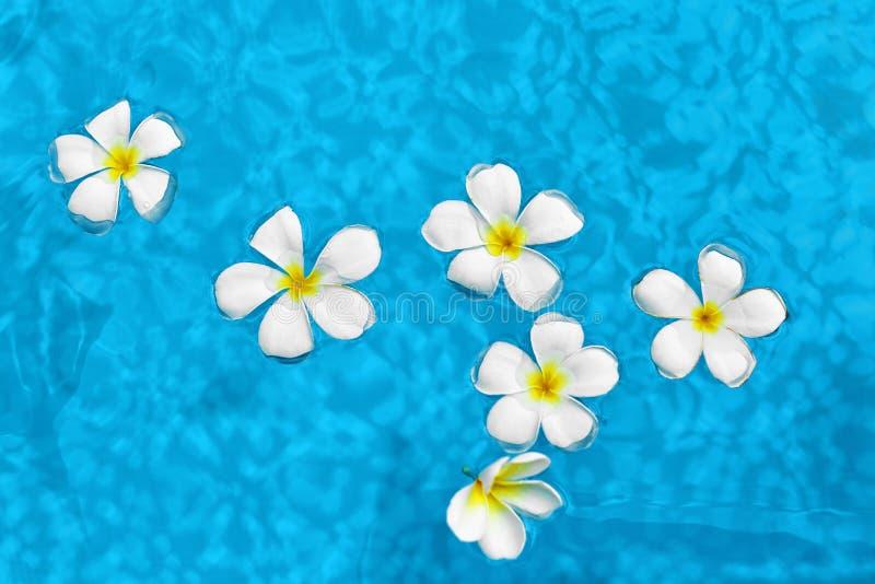 De zomer Kuuroordbloemen Frangipani Plumeria in Poolwater Wellness, royalty-vrije stock foto