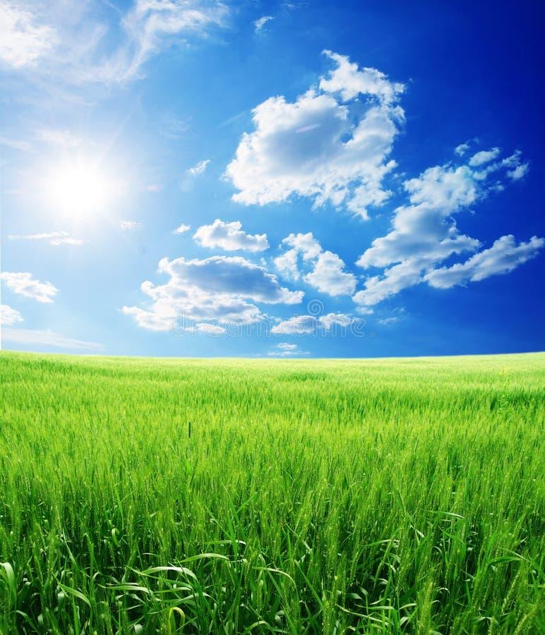De zomer landelijk landschap van de schoonheid stock foto