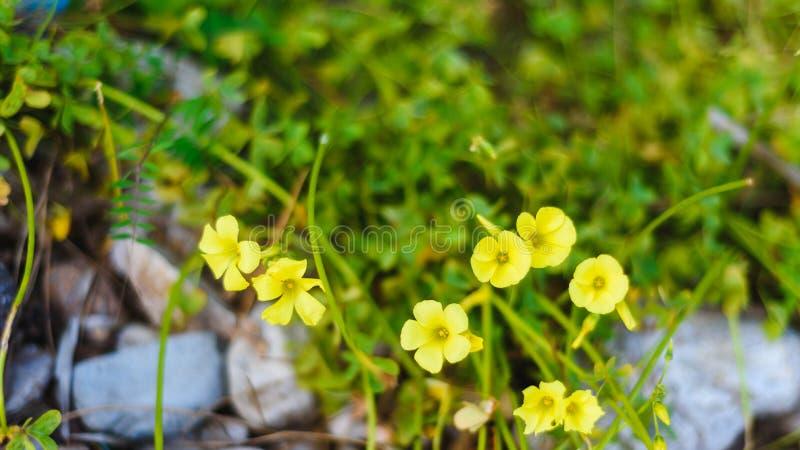 De zomer, de lenteachtergrond Bloemen De achtergrond van de aard Gele bloemen op groen stock fotografie