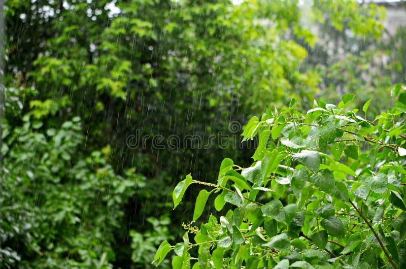 De zomer lichte regen royalty-vrije stock foto