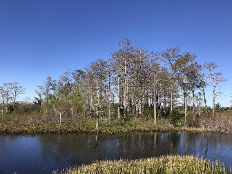 de zomer op bayou stock afbeelding