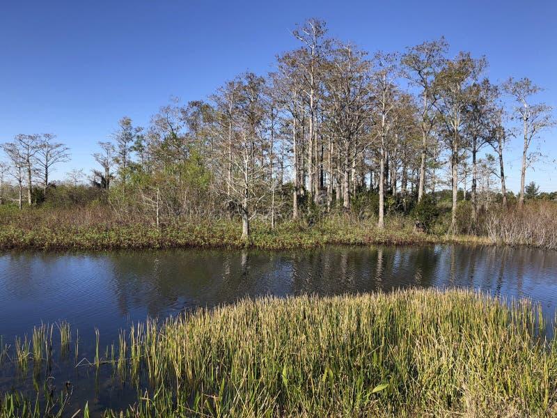 de zomer op bayou stock afbeeldingen