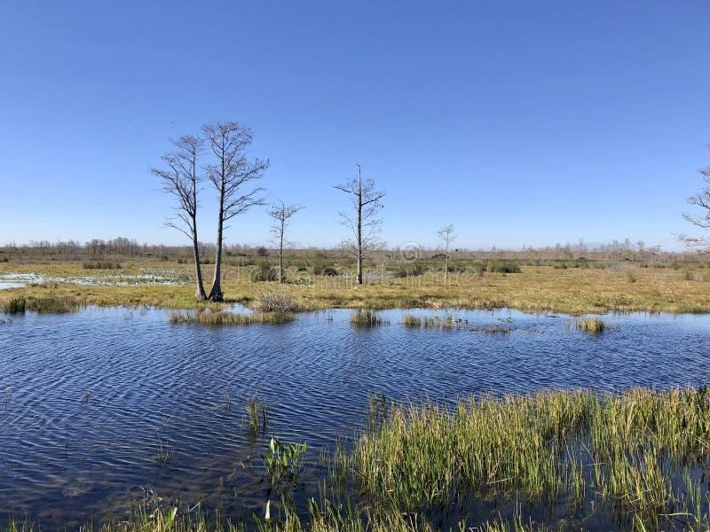 de zomer op bayou royalty-vrije stock fotografie