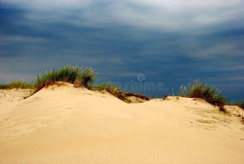 De zomer op de duinen royalty-vrije stock afbeeldingen